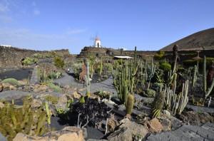 De bekende cactustuin