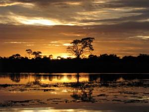 Amazone-gebied