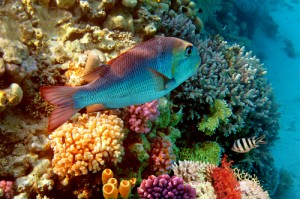 Koraalrif Rode Zee